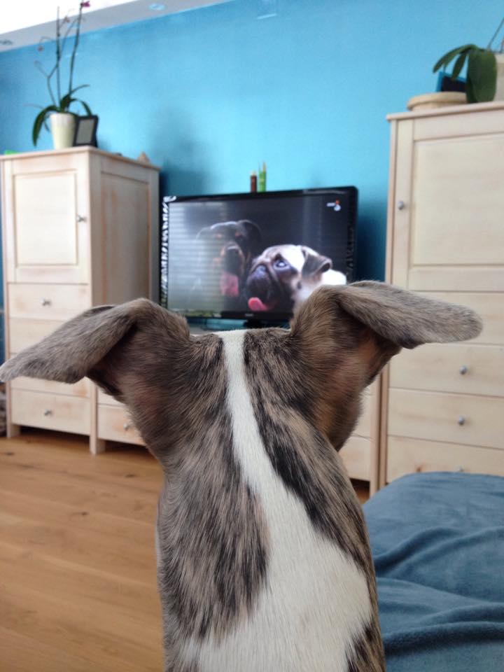Easy gleda TV