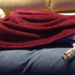 chilly zavzela dekco